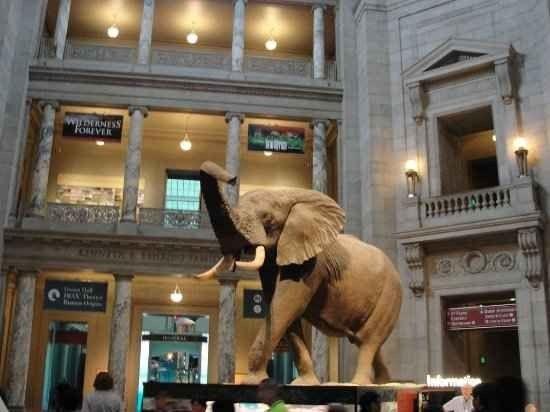 """متحف """"التاريخ الطبيعي"""" """" natural history museum"""".."""