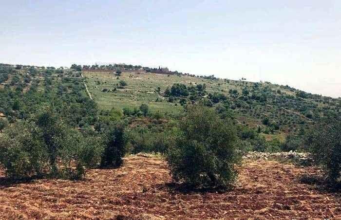 منطقة الحسينيات .. السياحة في جرش Jerash