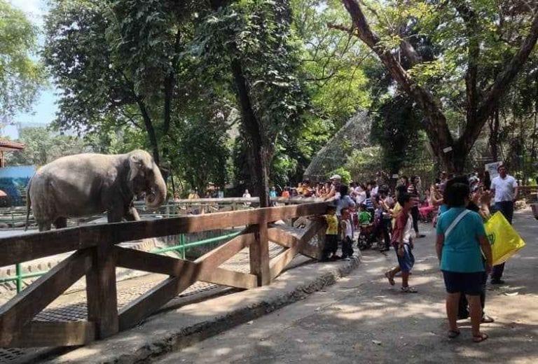 حديقة حيوان مانيلا