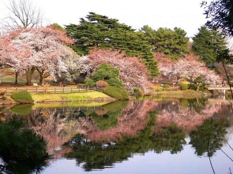 حديقة شينجوكو جيوين