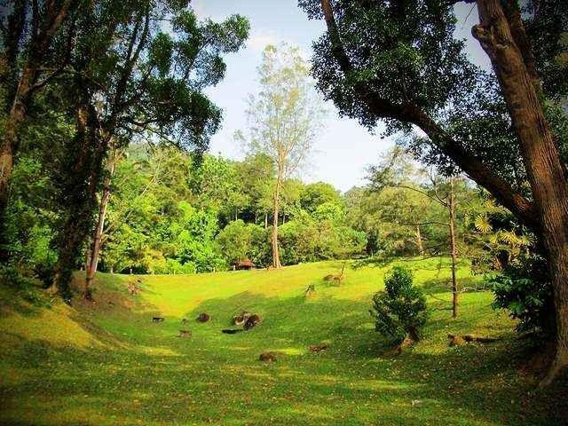 حديقة القرود