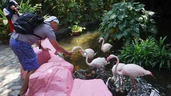 محمية لنكاوي للحيوانات البرية وجنة الطيور