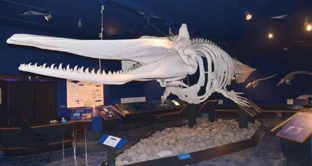 متحف التاريخ الطبيعي في مسقط