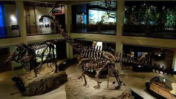 متحف هيوستن للعلوم الطبيعية