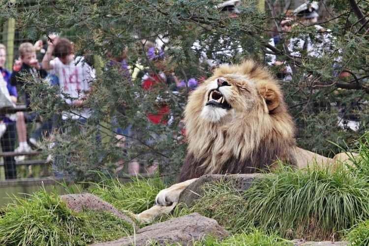"""- اليوم الخامس """"حديقة حيوانات شنغهاى """" .."""