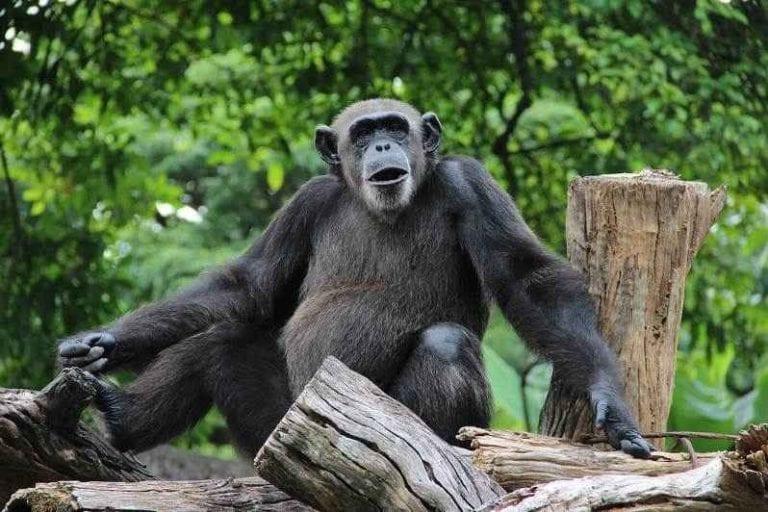 حديقة الحيوان الوطنية فى كولومبو