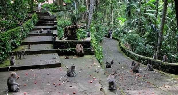"""اليوم الرابع """" غابة القرود أوبود -بحيرة براتان """" .."""