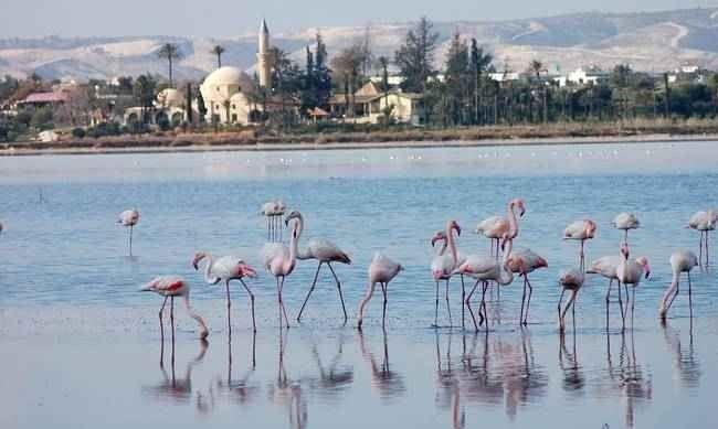 بحيرة الملح
