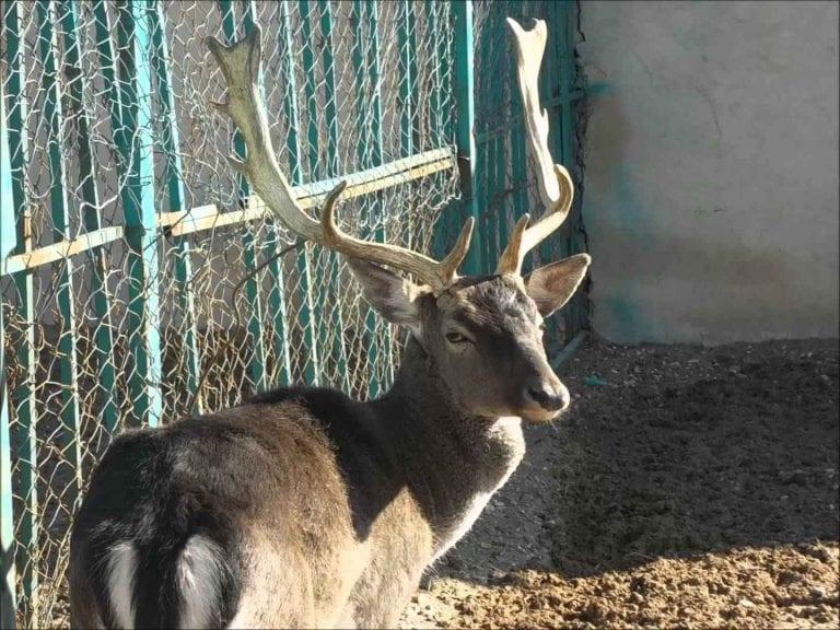 حديقة الأردن للحيوان .. منتزهات عائلية في الأردن Jordan