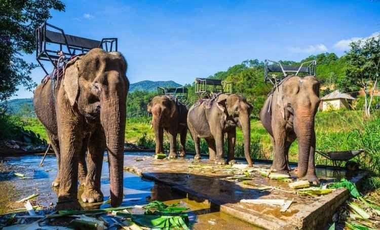 السياحة في دالات فيتنام
