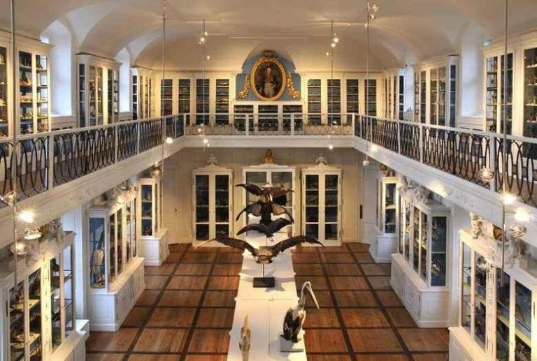 متحف التاريخ الطبيعىNaturkunde-Museum