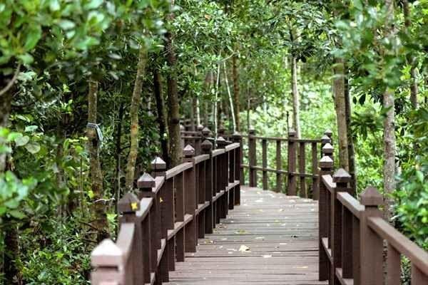 """"""" حديقة تانجونج بياىTanjung Piai National Park """" .."""