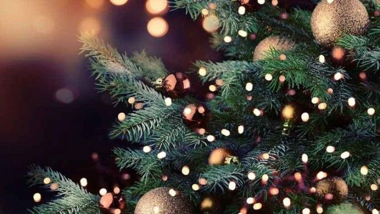 سق عيد الميلاد