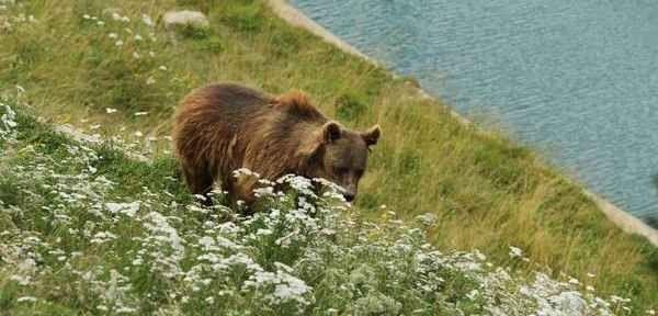 حديقة الدبBear Park Switzerland