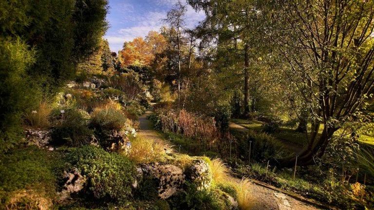 الحديقة النباتيةBern Botanical Garden