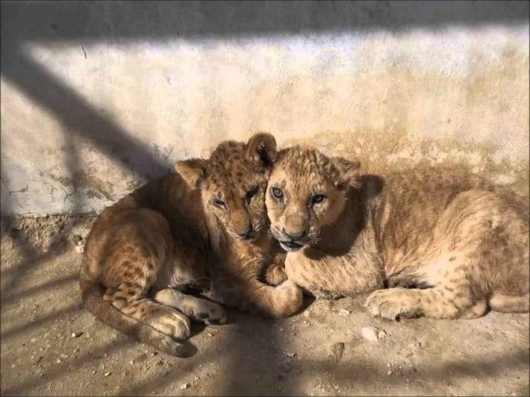 حديقة الأردن للحيوان-ملاهي في الأردنJordan