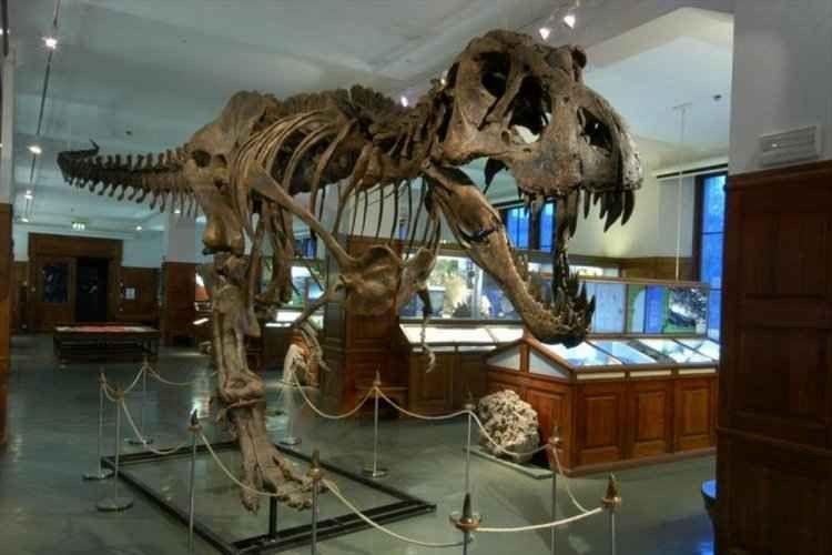 """إذهب فى جولة مميزة لمتحف """"التاريخ الطبيعى""""..لإسعاد أطفالك.."""