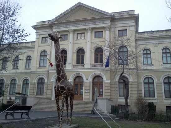 متحف التاريخ الطبيعى Grigore Antipa