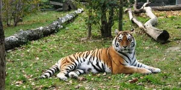 حديقة حيوانات سفاري فاسانولانديا