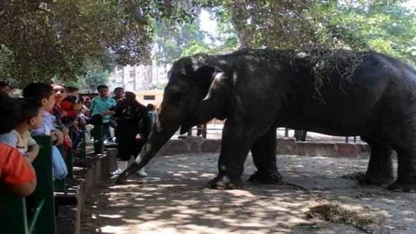 أنشطة سياحية جميلة فى حديقة حيوان الجيزة