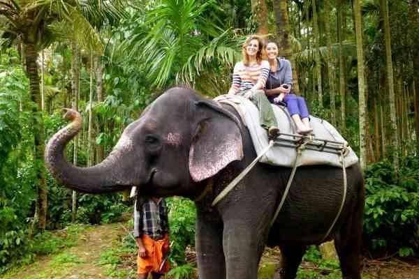 """""""ركوب الأفيال"""" أبرز الأنشطة السياحية بحديقة """"الفيلة"""".."""