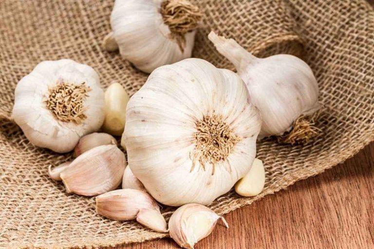 Photo of فوائد الثوم…. دليلك الكامل للتعرف علي الثوم وفوائده للجسم والصحة العامة