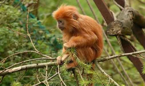 جزيرة القردة