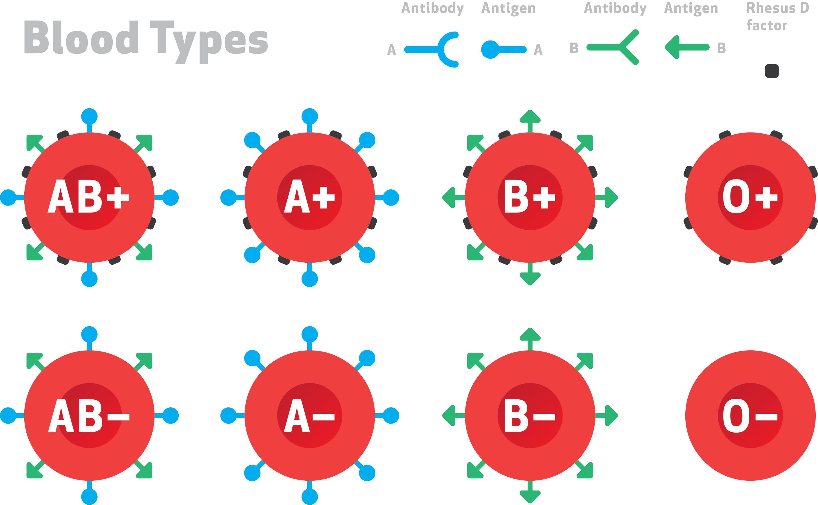 Photo of كيف أعرف فصيلة دمي ؟ : دليلك الكامل لمعرفة كل ما يخص فصيلة دمك ؟
