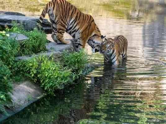 حديقة حيوانات كولونياCologne Zoological Garden