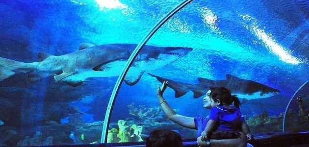 السياحة للاطفال في ماليزيا