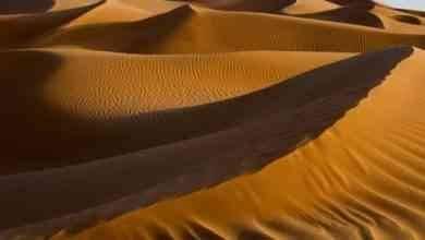 Photo of حقائق عن الربع الخالي … ومناخها والحياة الفطرية بها