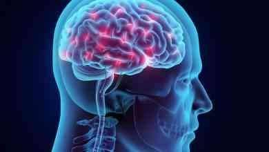 Photo of حقائق عن الدماغ … إليك مجموعة معلومات مثيرة عن الدماغ البشرية