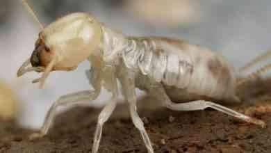 Photo of وصفة للقضاء على النمل ..تعرف على أسباب وجود النمل و6 وصفات للتخلص منه