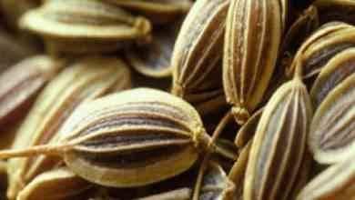 Photo of طريقة زراعة الينسون فى المنزل .. تعرف على التربة الأزمة قبل الزراعة و10 أستخدامات للينسون .