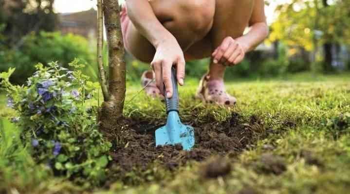 السماد _ طريقة زراعة الكاجو