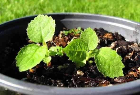 التربة _ طريقة زراعة الكيوى