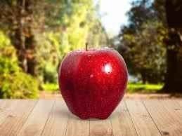 Photo of طريقة زراعة التفاح