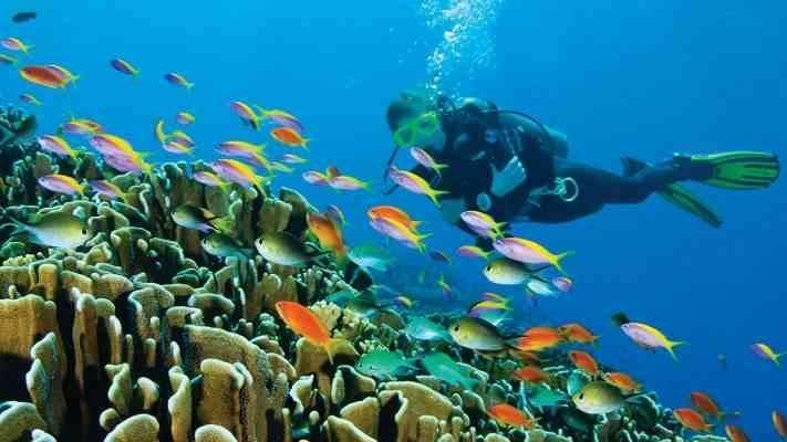 أنواع الغوص - مصطلحات الغوص بالإنجليزي