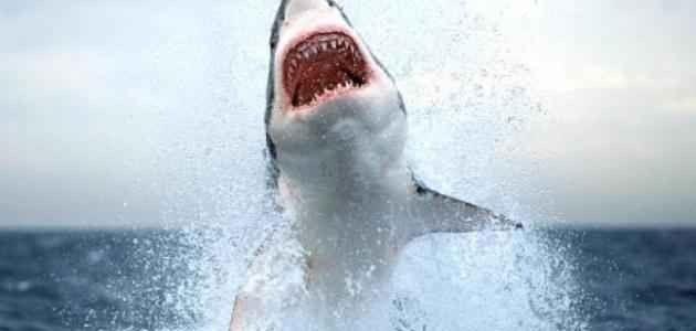 حقائق عن القرش