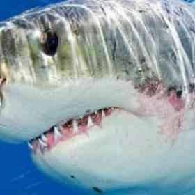 أنواع القرش