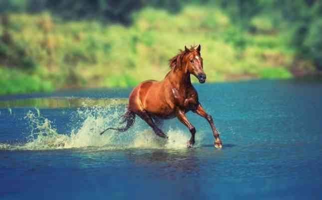 حقائق عن الحصان