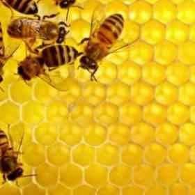ما هو النحل