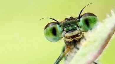 حقائق عن الحشرات