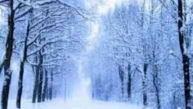 Photo of معلومات عن فصل الشتاء .. تعرف معنا على أهم المعلومات الرائعة عن فصل الشتاء