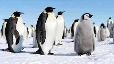 صورة حقائق عن البطريق .. ومعلومات عن حياته وطبيعته