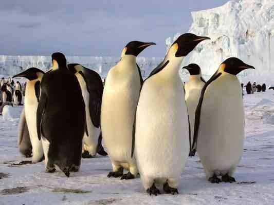 مستعمرات البطريق