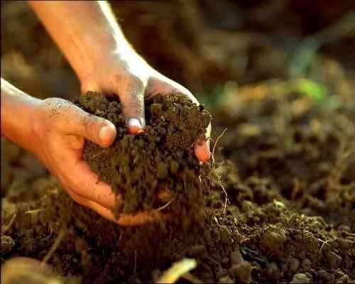 مصطلحات الزراعة عن التربة