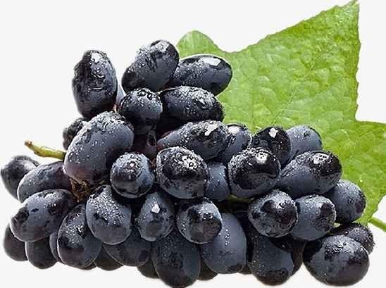 نتيجة بحث الصور عن فوائد فاكهة العنب