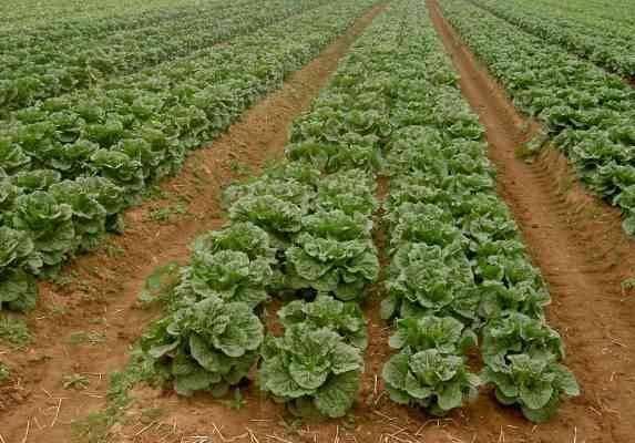 مصطلحات الزراعة عن المحاصيل