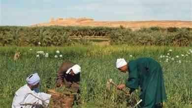 صورة مصطلحات الزراعة .. تعرف على مصطلحات الزراعة بالانجليزي ومقابلها بالعربي